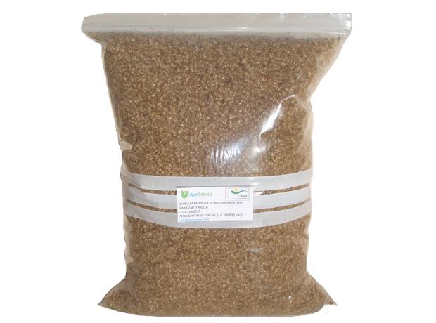 semillas-stevia